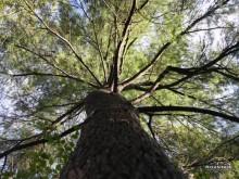 The Gathering Tree near Deep Creek Lake